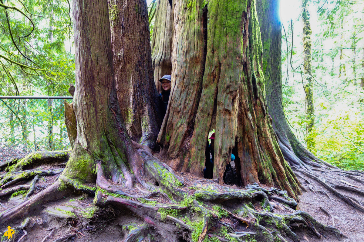 2017.06.19 Ouest canadien Hope 1 Lynn canyon park Vancouver (60)-12017.06.01 Ouest canada