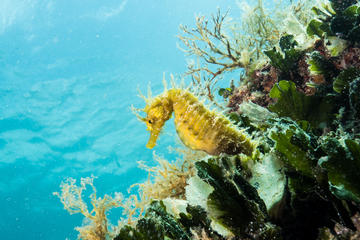 discover-scuba-diving-in-pula-in-pula-226383