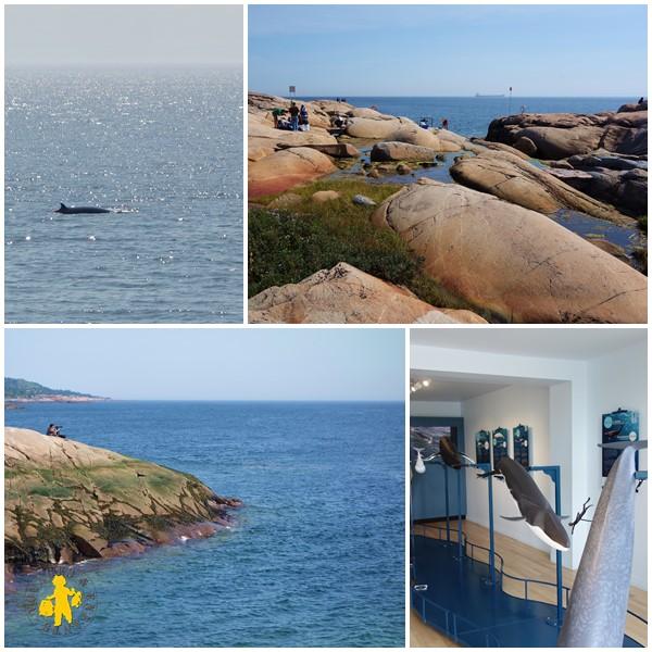 Observation Escoumins baleine Québec Tadoussac  2013.08