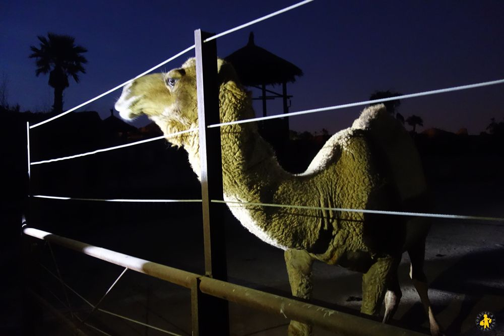 Benidorm Terra Natura Zoo by night